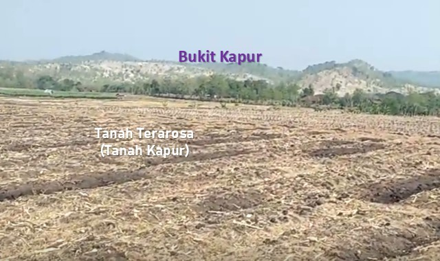 jenis tanah terarosa dan ciri-cirinya
