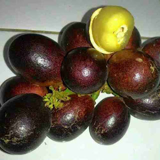 manfaat buah matoa