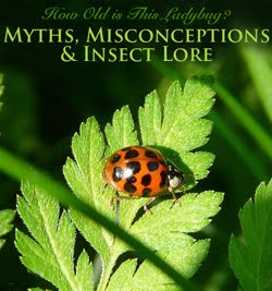 Myths, Misconceptions and Insect Lore