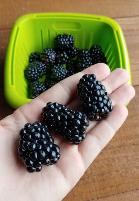 3 giant blackberries in the palm of my hand