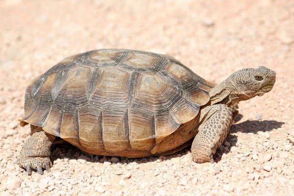 contoh binatang melata kura kura