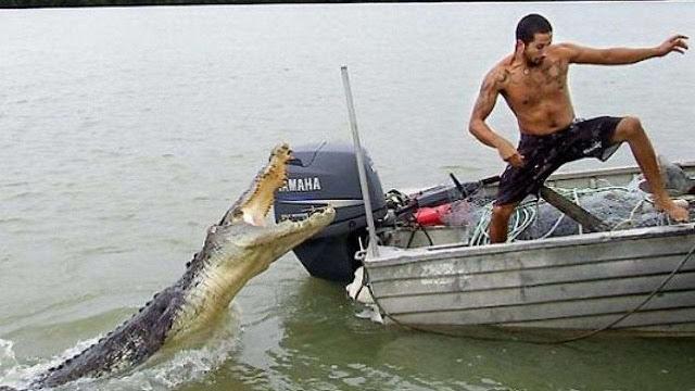 Crocodile Is Beast: Is It True?