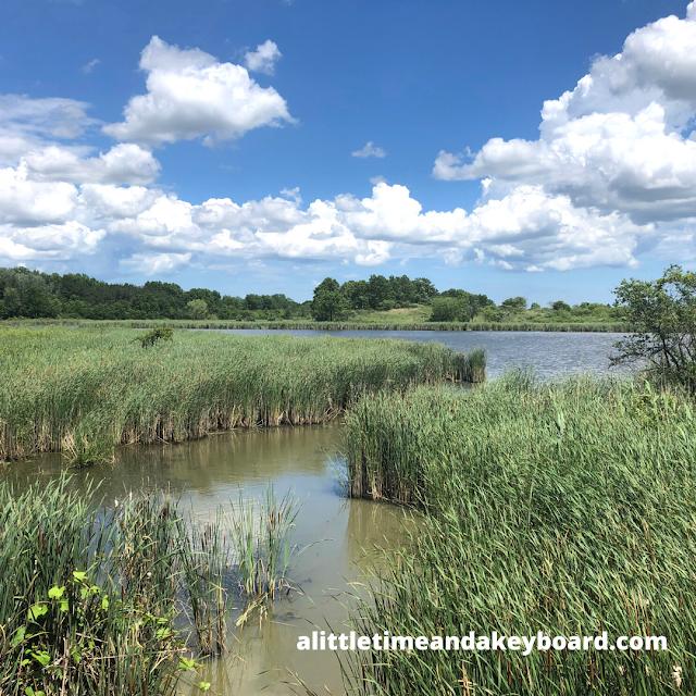 Breathtaking wetland view at McDonald Woods!