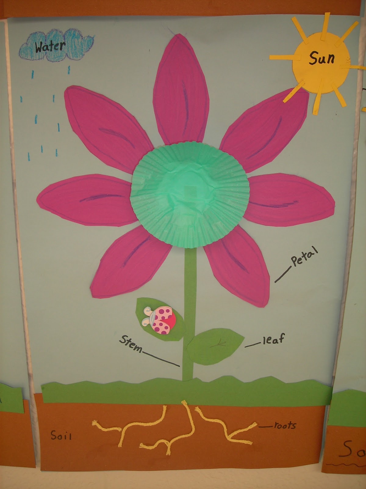 Creating Lifelong Learners: Plant Parts and Needs Diagram