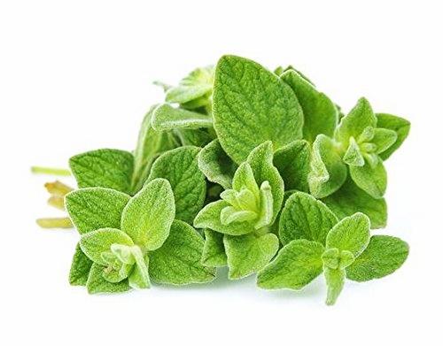 5 Herba Itali Sering Digunakan Untuk Memasak