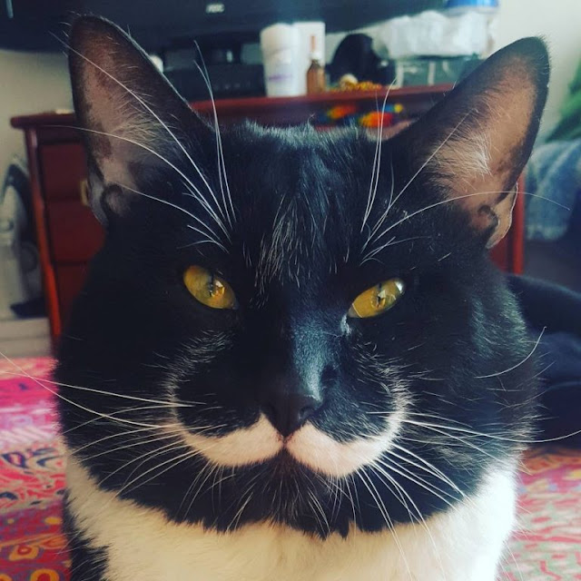 Man Finds Tuxedo Cat With Truly The Most Incredible Mustache You'll Ever See…
