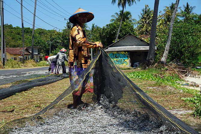 Aktivitas tiap musim ikan teri di Karimunjawa