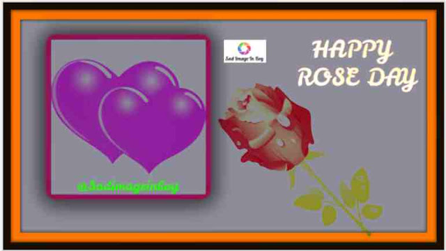 Rose Day Images | hd rose wallpaper, quotes on roses, valentine day special couple images, rose day pic