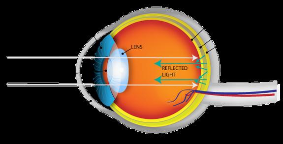 जानवरों की आंखें क्यों चमकती हैं?  रात में जानवरों की आंखे चमकने का कारण। why do some animals' eyes glow at night?