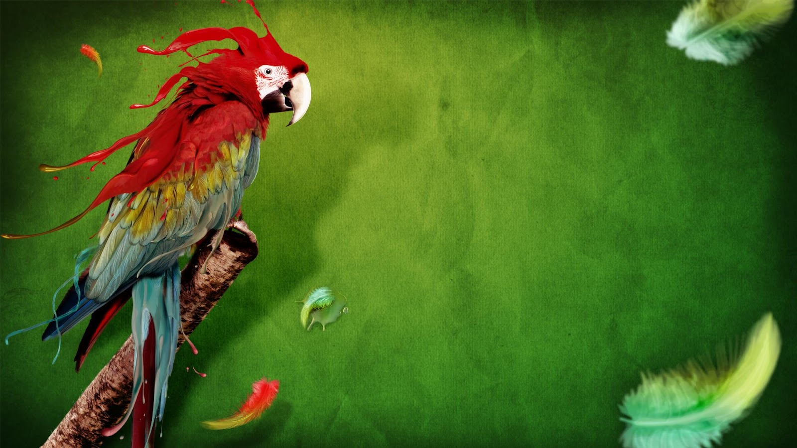 Parrot Full HD Wallpapers, Parrot Wallpapers, Parrot HD