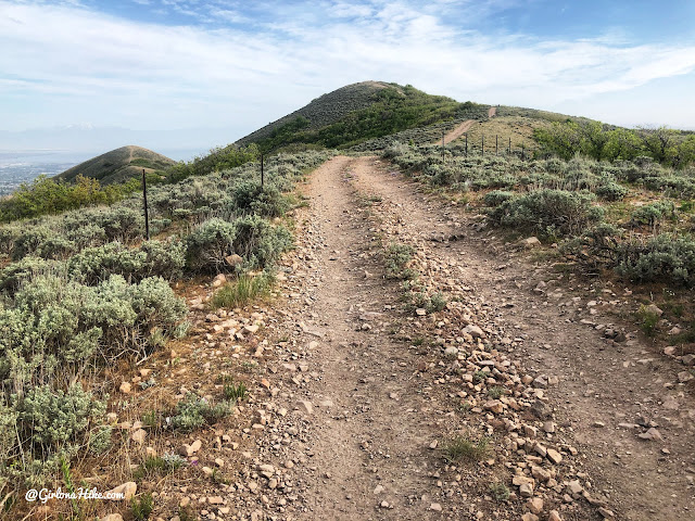 Hiking at the Deer Ridge Off Leash Area, draper utah trail
