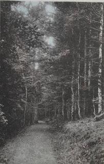 CPA forêt d'Auvergne