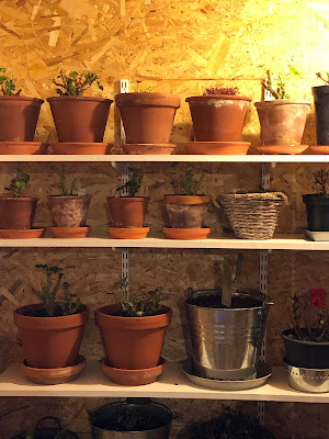 Isolerat utrymme förvaring växter