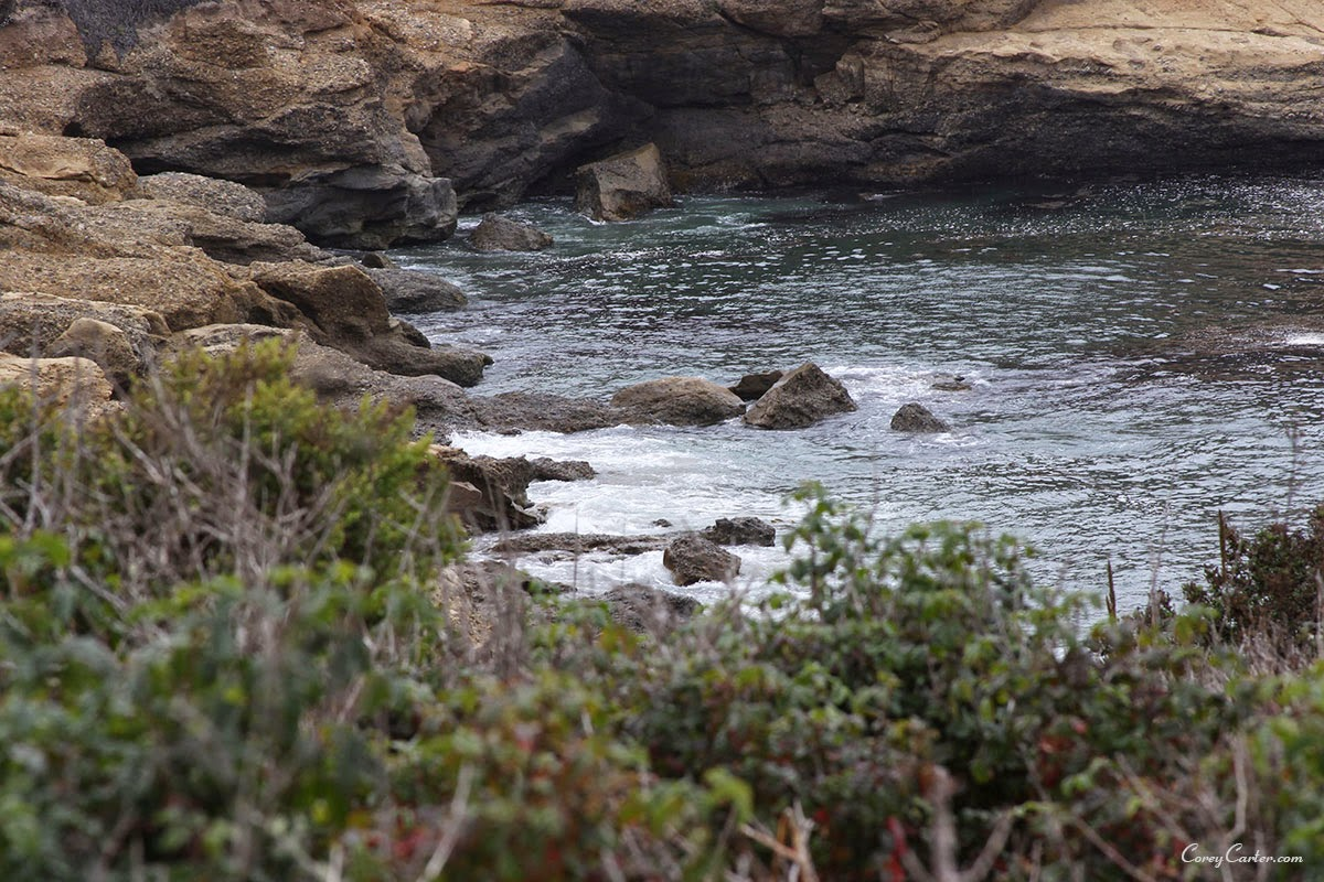 Point Lobos State Reserve - Monterey, CA