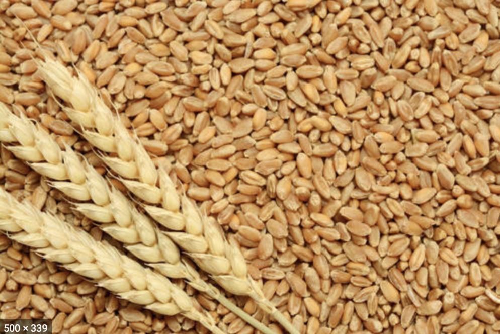 wheat gehu