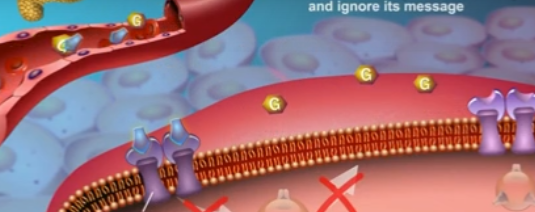 What Causes Insulin Resistance ?