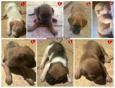 filhotes de cachorro lindos fofos puppies puppy cub pup