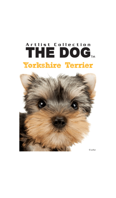 THE DOG Yorkshire Terrier
