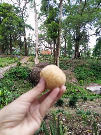 hutan biskit