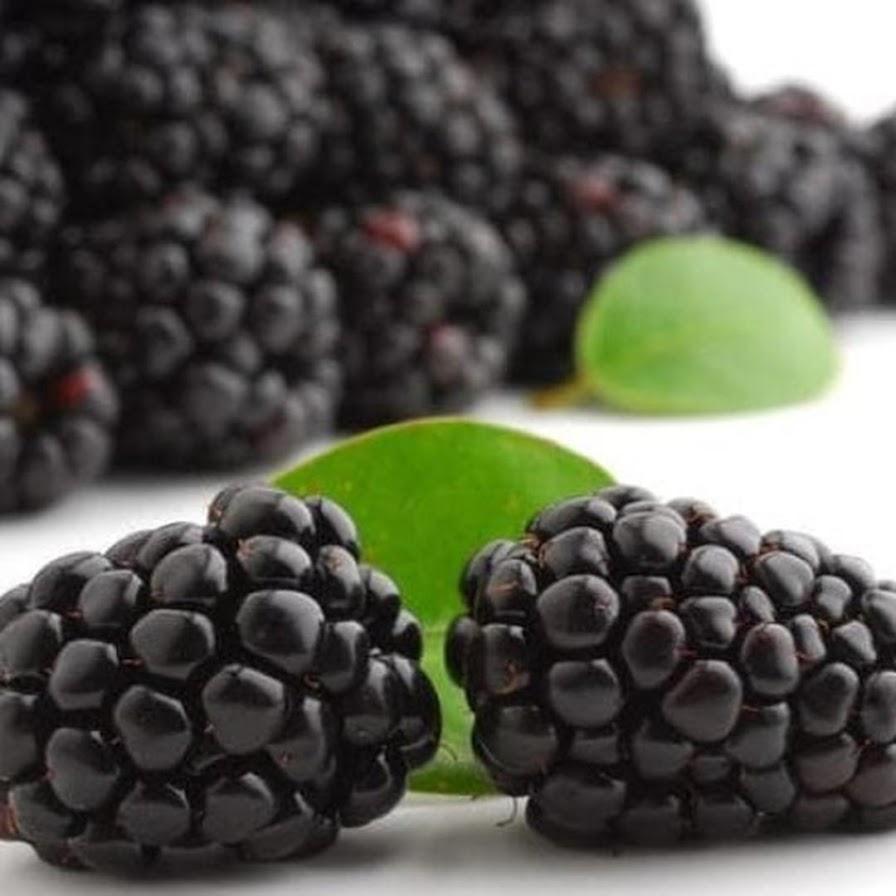 Benih Bibit Biji Buah Black Raspberry Import Benih Unggul isi 10 pcs Pematangsiantar