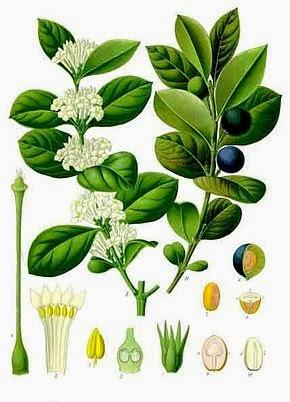 http://biofaculte.blogspot.com/2015/03/tp-biologie-vegetale-svt-s2-les-embryophytes.html