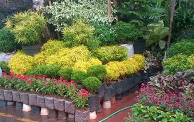 Penjualan Bunga Hias Di Kota Jayapura Meningkat Jelang Natal