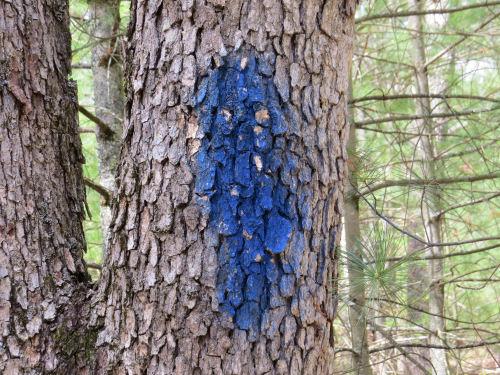 dark blue spray paint on a tree