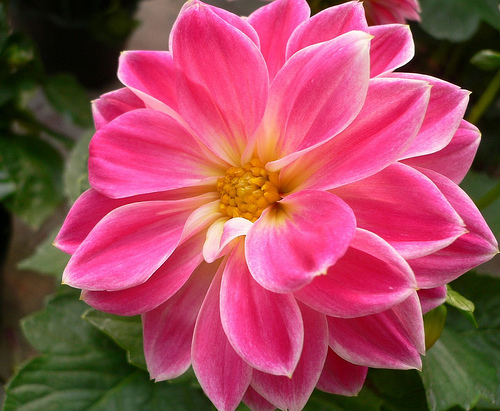 Image Result For Mexican National Flower