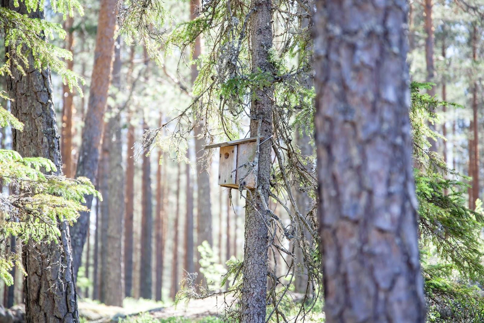 metsä luonto kintulammi