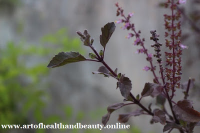 benefits of eating tulsi leaves in an empty stomach