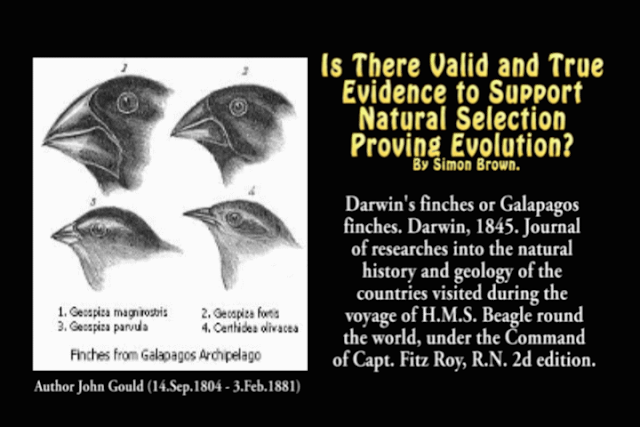 Is There Valid and True Evidence to Support Natural Selection Proving Evolution?