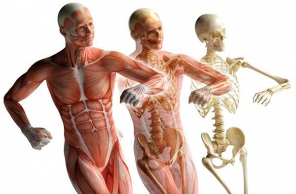 dieta low carb aumenta o catabolismo muscular