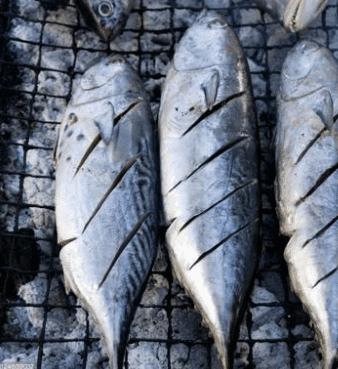 gambar ikan tongkol png gambar ikan hd gambar ikan tongkol png gambar ikan hd