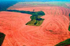 DEFORESTACIÓN DE LA AMAZONÍA