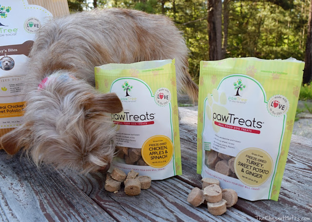 Bailey and pawTreats from pawTree