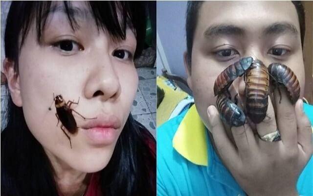 تحدي الصراصير