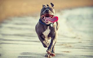 انواع الكلاب وصورها واشكالها، اجمل صور كلب أليف 1