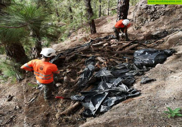 Transición Ecológica destina 300.000 euros al control de especies exóticas en la Caldera de Taburiente