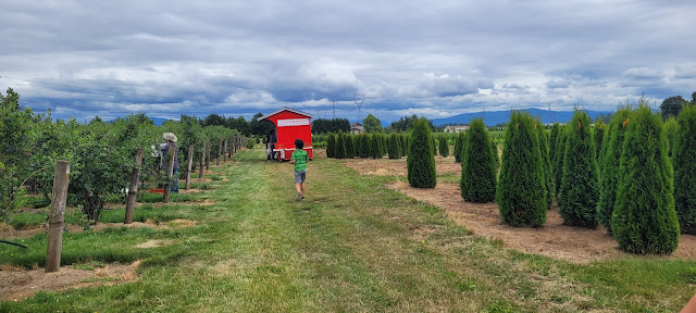 Blueberry field and the U-pick booth