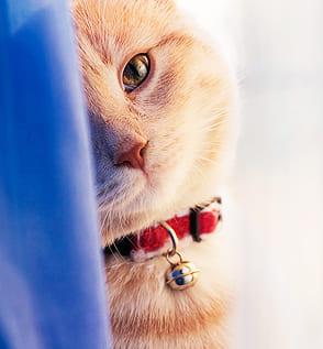 cats wallpapers thumbnail