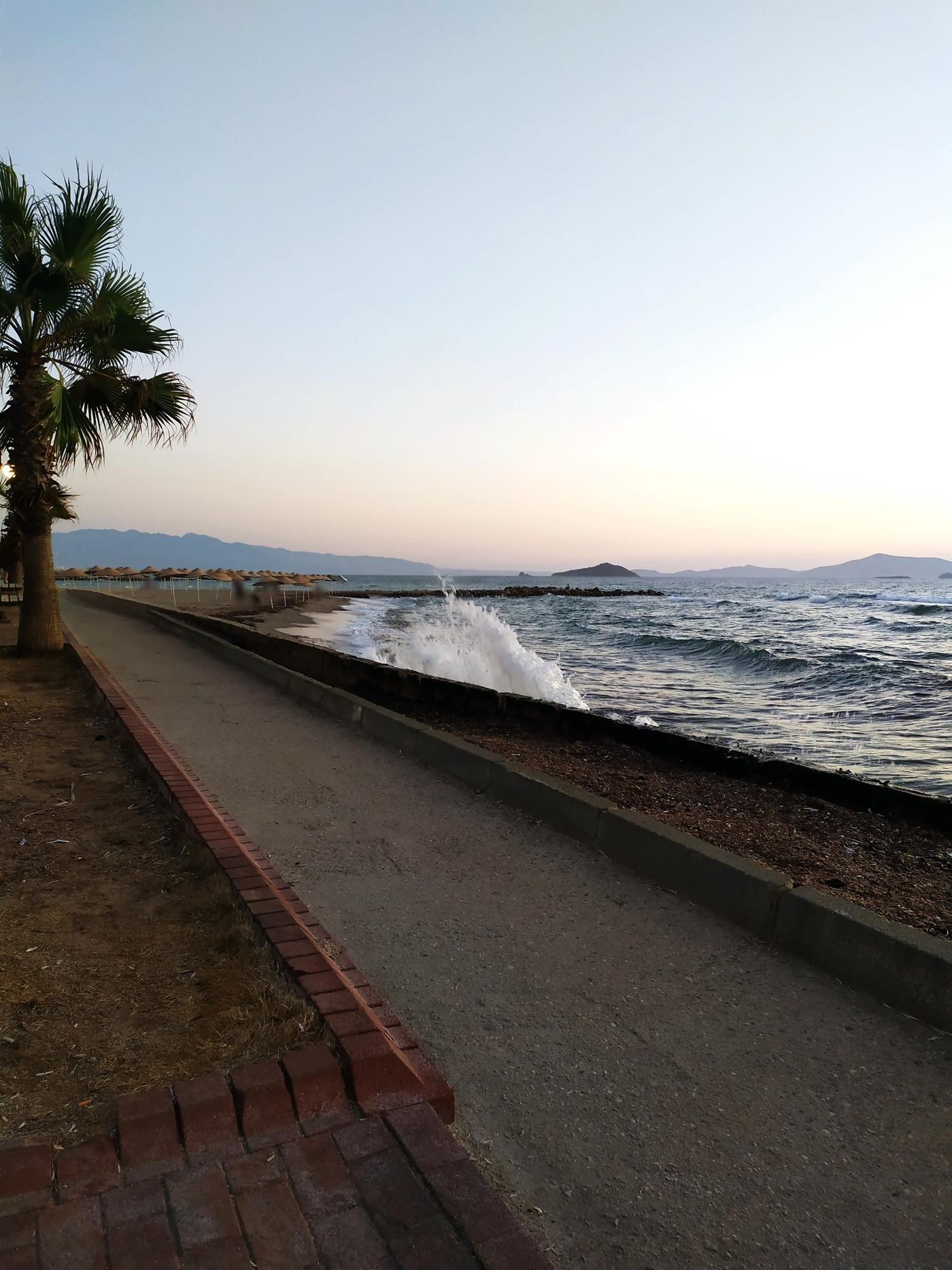 Palm Tree and Great Sea View on the Coastal Walkway