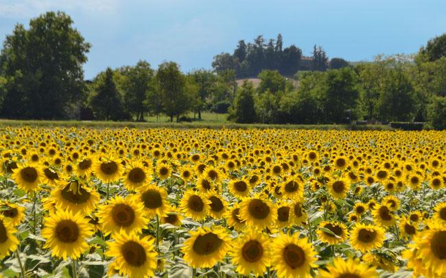 Cosa vedere in Piemonte