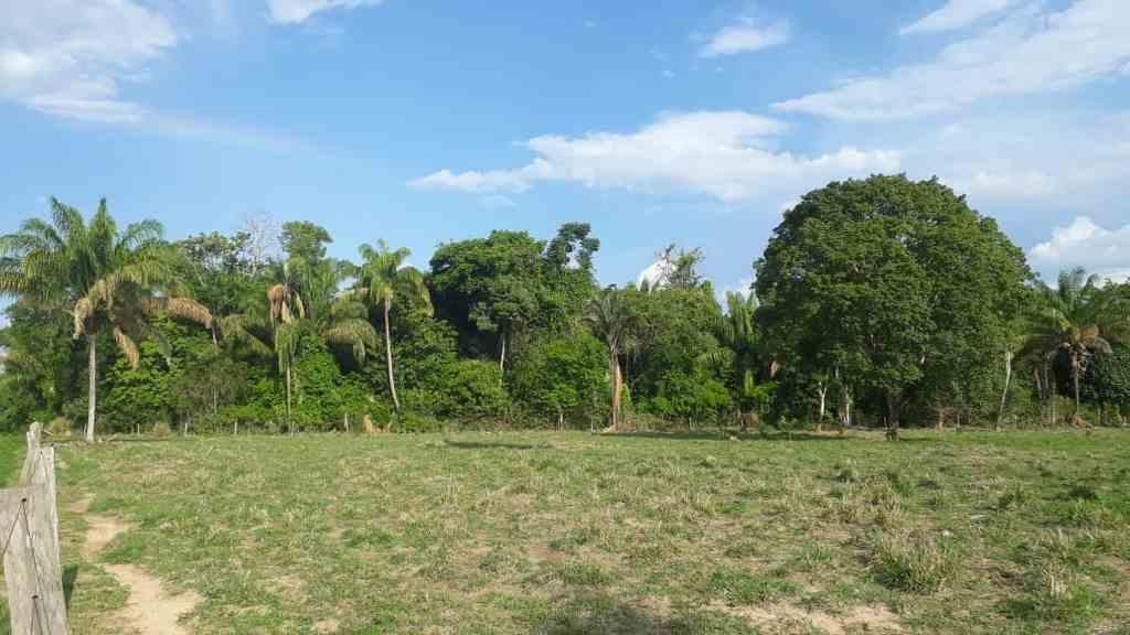 A lei que cria a Política Nacional de Pagamento por Serviços Ambientais (PNPSA), sancionada na última quarta-feira, institui a remuneração de proprietários de terra que conservam áreas de cobertura vegetal, e vem de encontro com a metodologia desenvolvida pelo BMV (Brasil Mata Viva) desde 2007. Atualmente, a área de vegetação preservada que é cadastrada no programa do BMV é de 5.486.842.105,26m², aproximadamente 768.465 campos de futebol.