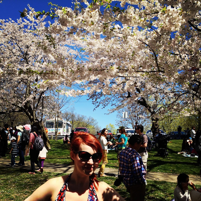 Ashley Gibson cherry blossoms Toronto High Park sakura