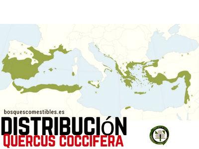 Mapa de distribución del Quercus coccifera, Coscoja, por el Mediterráneo