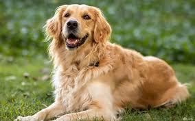 صور كلاب - أفضل خلفيات أنواع الكلاب بالصور 2021