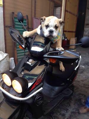 perro en motocicleta
