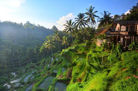 Menikmati Alam di Bali dengan Ubud Bike Tour