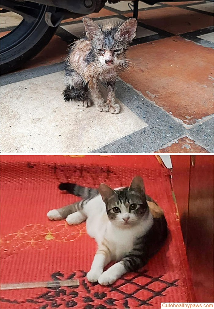 The Difference A Rescue Can Make