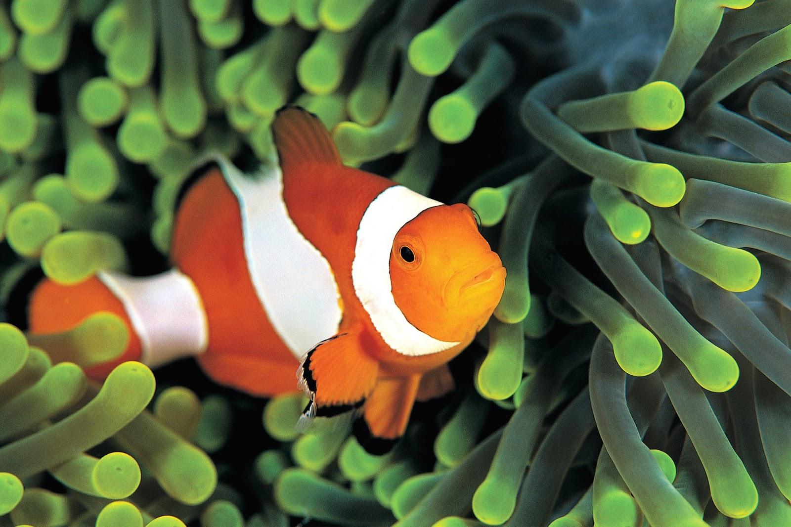 Fond d'écran poisson animé - Fonds d'écran HD